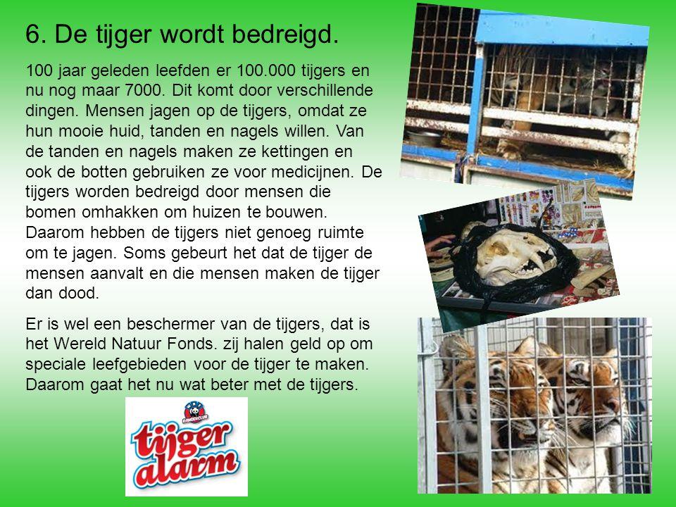6. De tijger wordt bedreigd.
