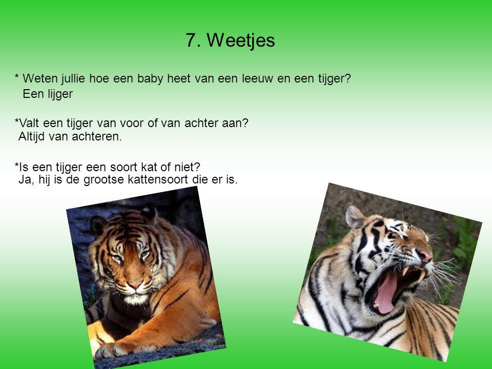 7. Weetjes * Weten jullie hoe een baby heet van een leeuw en een tijger *Valt een tijger van voor of van achter aan