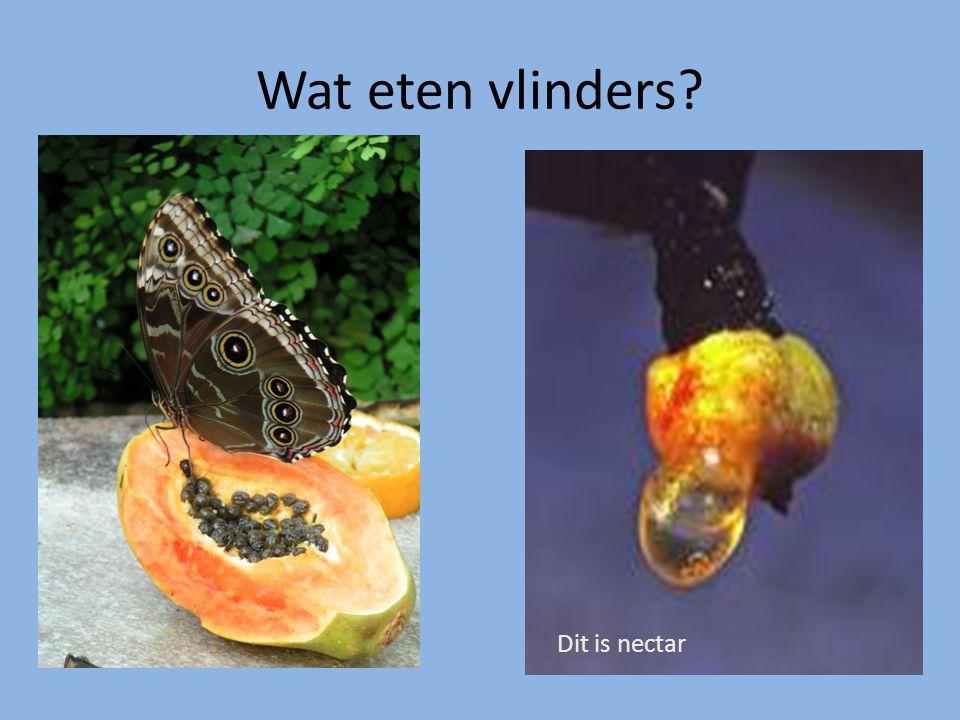 Wat eten vlinders Dit is nectar
