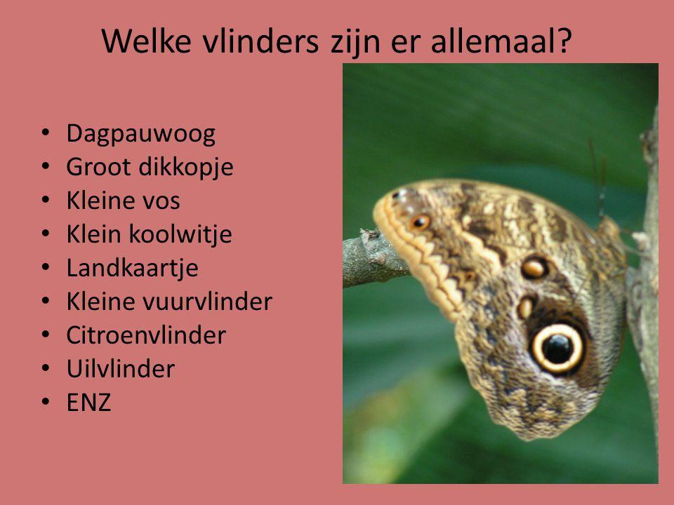 Welke vlinders zijn er allemaal