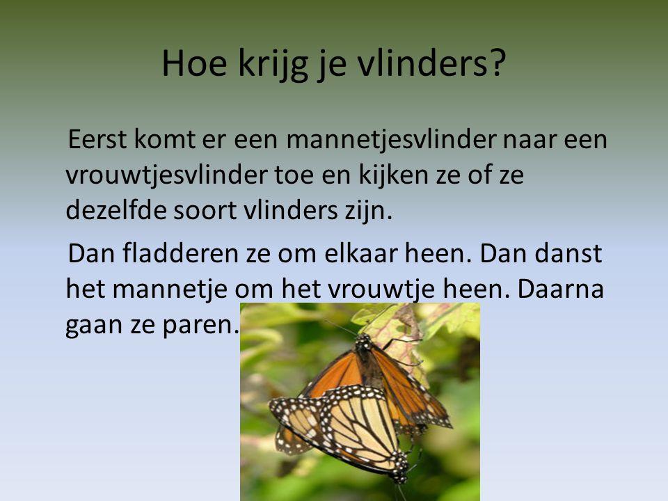 Hoe krijg je vlinders