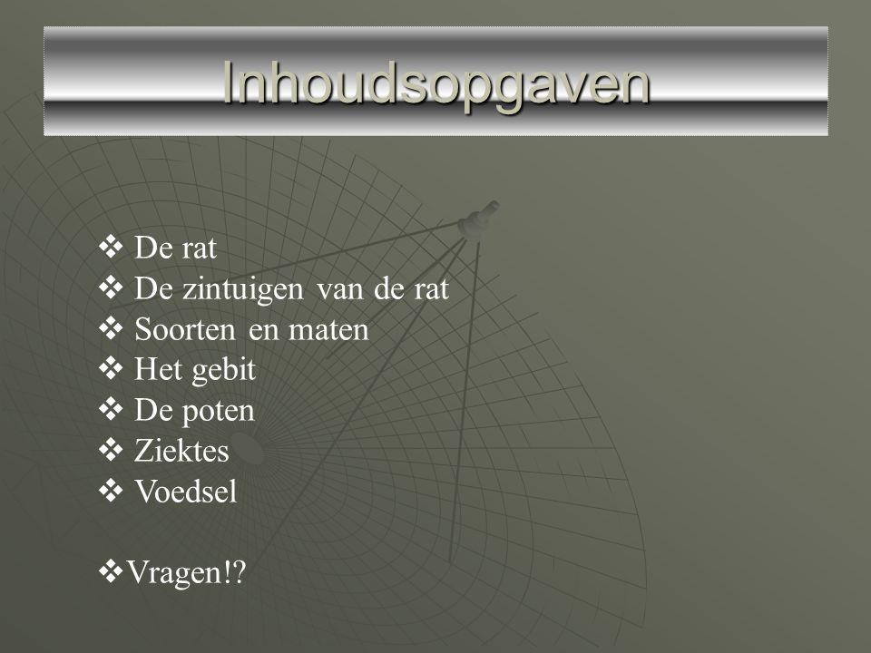 Inhoudsopgaven De rat De zintuigen van de rat Soorten en maten