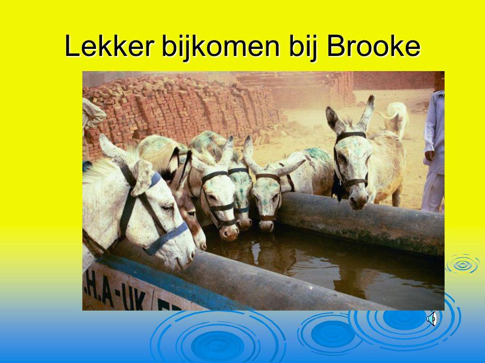 Lekker bijkomen bij Brooke
