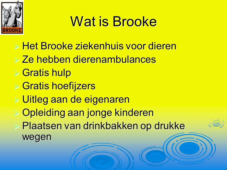 Wat is Brooke Het Brooke ziekenhuis voor dieren