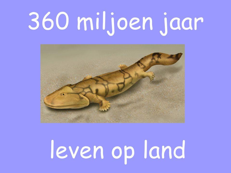 360 miljoen jaar leven op land
