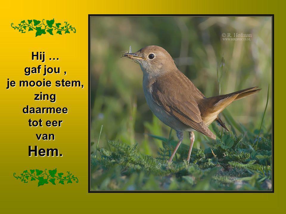 Hij … gaf jou , je mooie stem, zing daarmee tot eer van Hem.