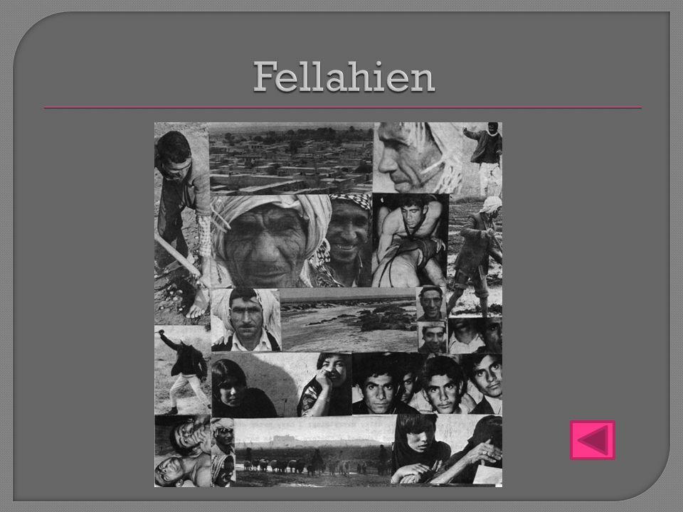Fellahien