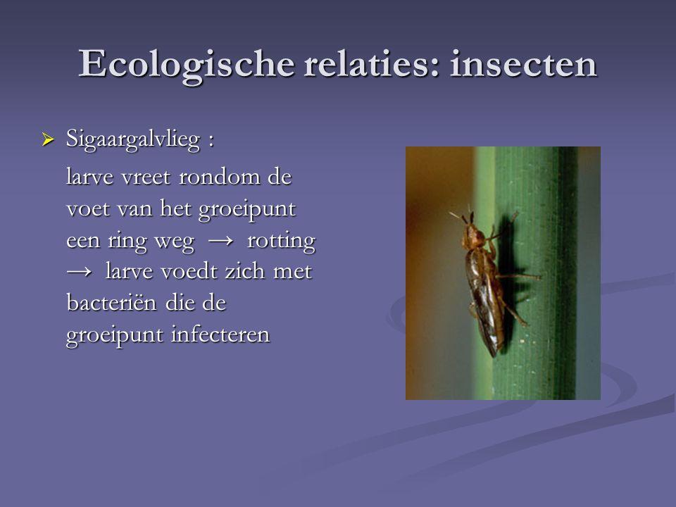 Ecologische relaties: insecten