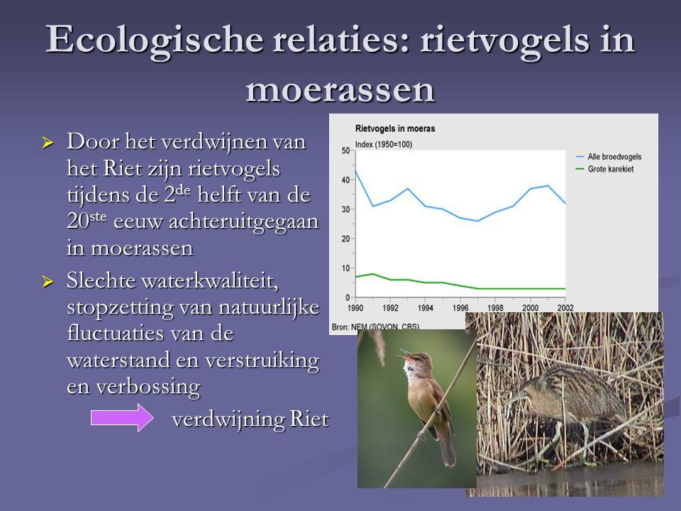 Ecologische relaties: rietvogels in moerassen