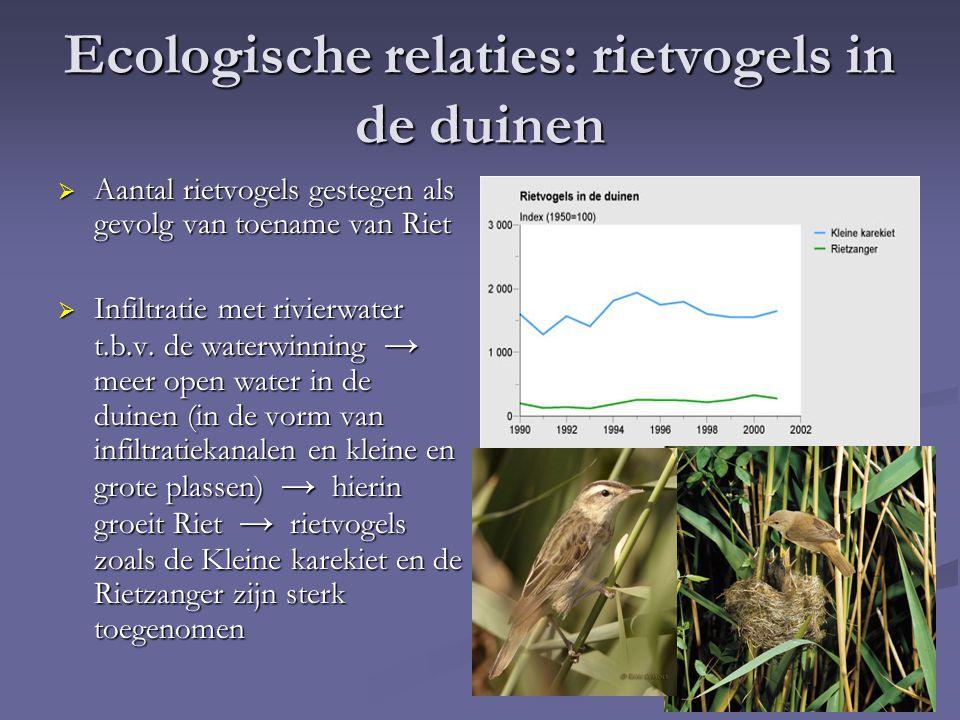 Ecologische relaties: rietvogels in de duinen