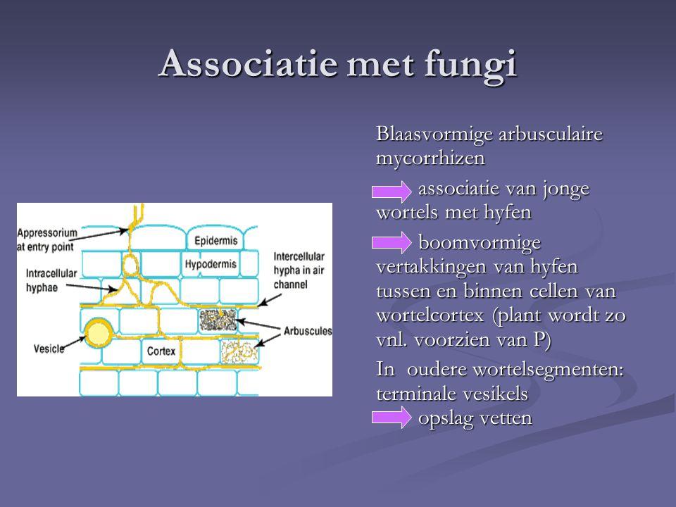 Associatie met fungi Blaasvormige arbusculaire mycorrhizen