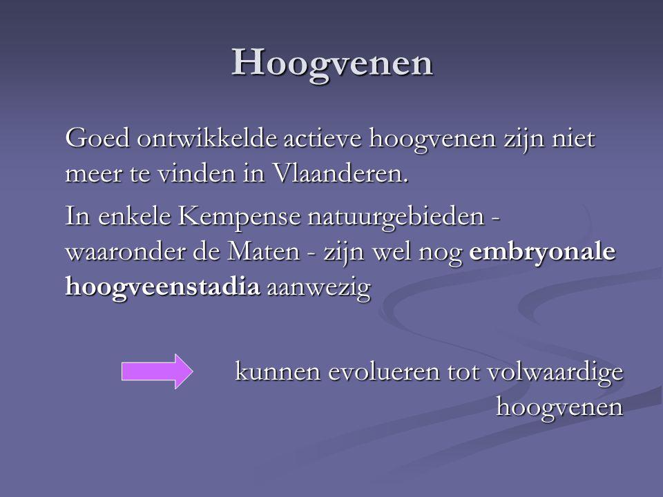 Hoogvenen Goed ontwikkelde actieve hoogvenen zijn niet meer te vinden in Vlaanderen.