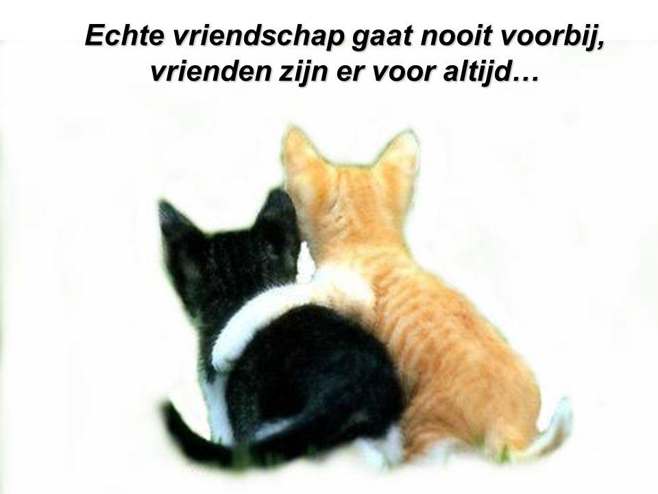Echte vriendschap gaat nooit voorbij, vrienden zijn er voor altijd…