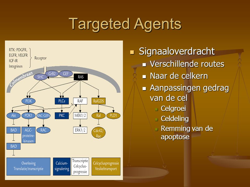 Targeted Agents Signaaloverdracht Verschillende routes Naar de celkern