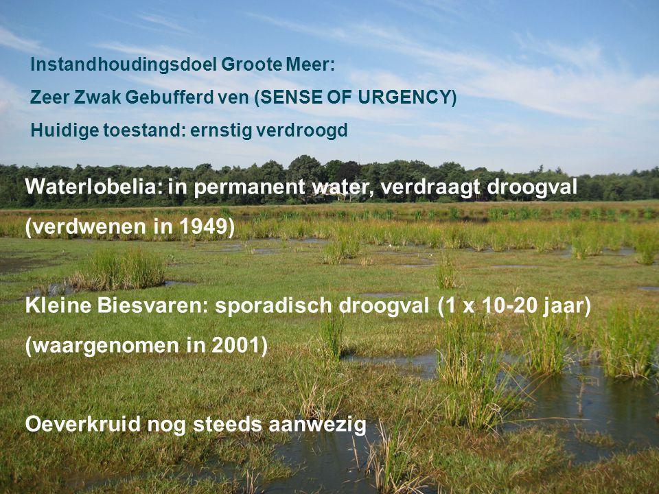 Waterlobelia: in permanent water, verdraagt droogval