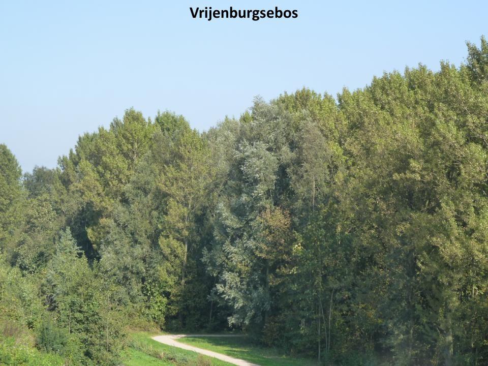 Vrijenburgsebos