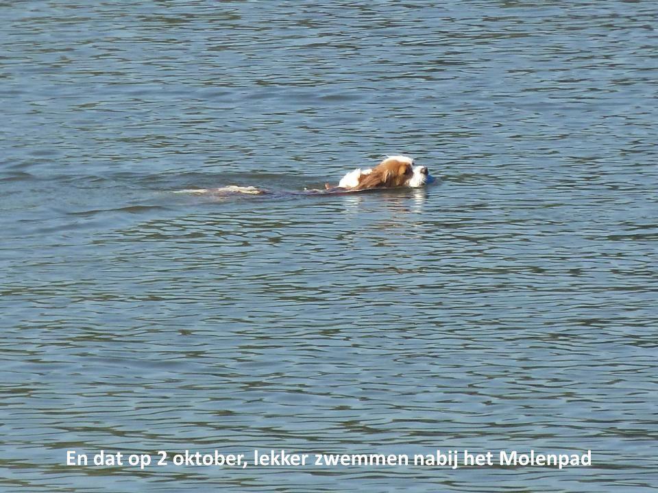 En dat op 2 oktober, lekker zwemmen nabij het Molenpad
