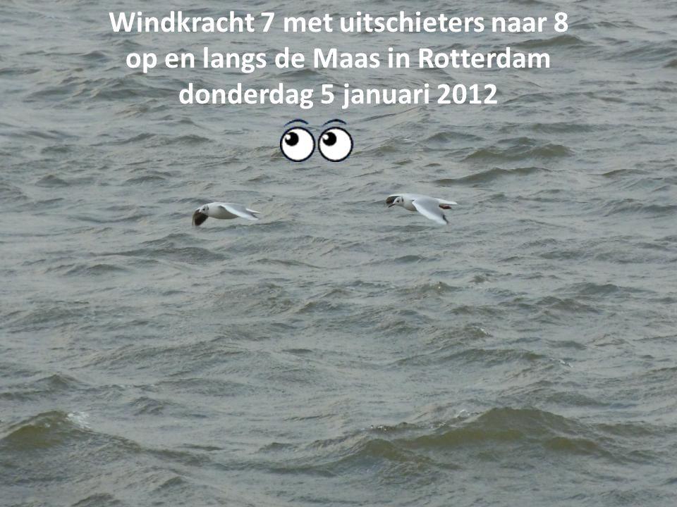 Windkracht 7 met uitschieters naar 8 op en langs de Maas in Rotterdam