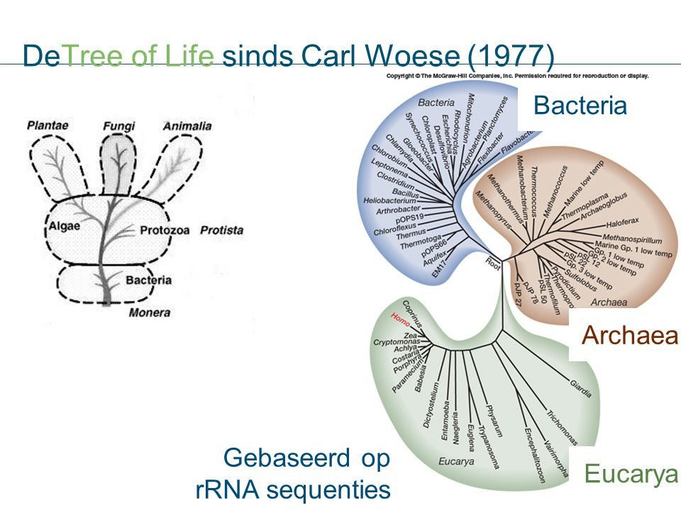 DeTree of Life sinds Carl Woese (1977)
