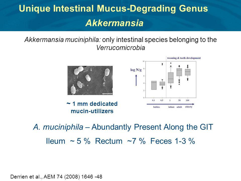 Unique Intestinal Mucus-Degrading Genus