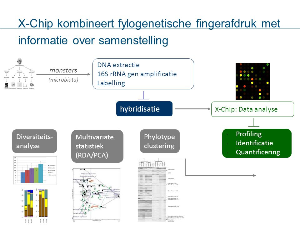 2-02-12 3131. X-Chip kombineert fylogenetische fingerafdruk met informatie over samenstelling. DNA extractie.