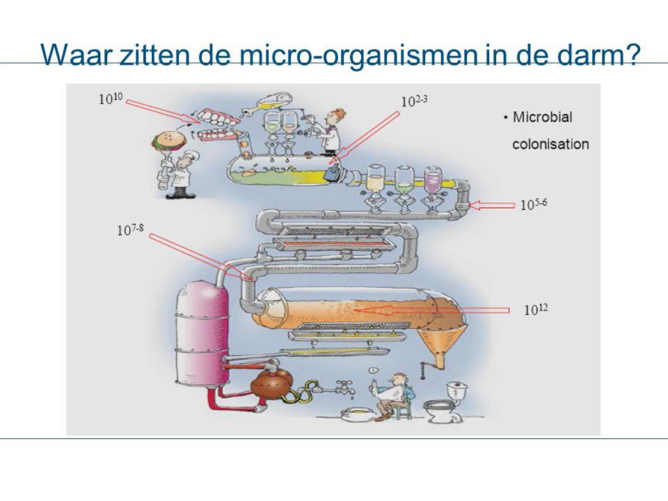 Waar zitten de micro-organismen in de darm