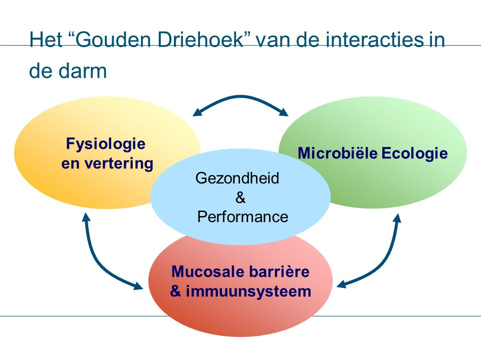 Het Gouden Driehoek van de interacties in de darm