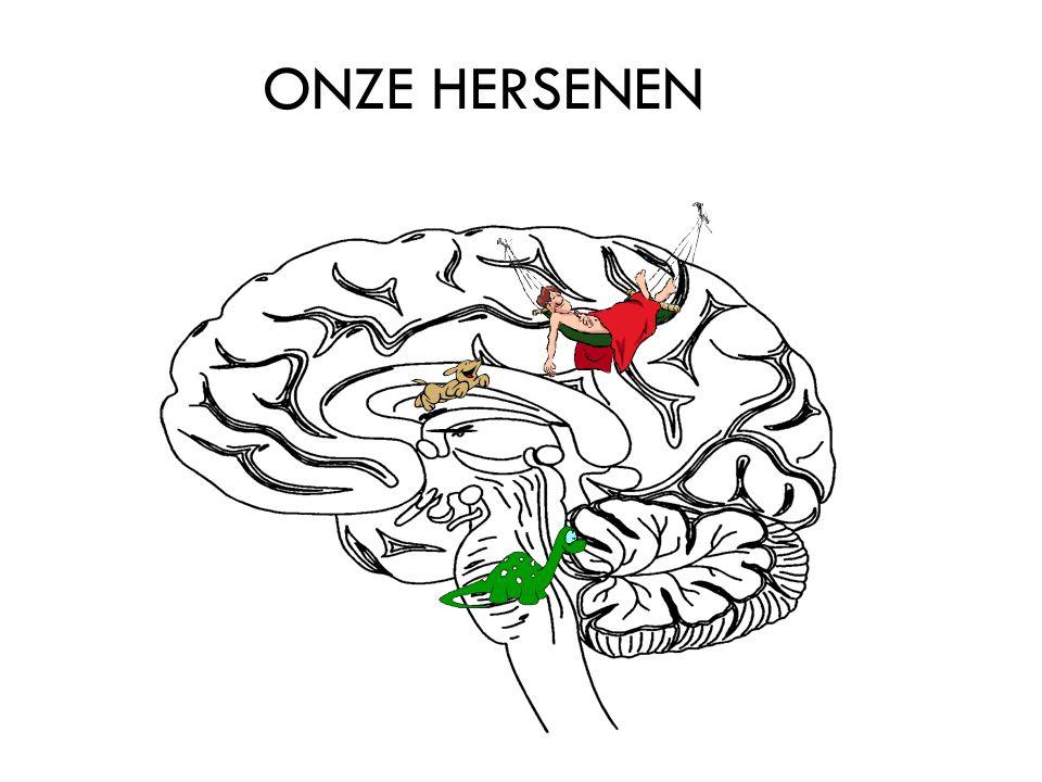 ONZE HERSENEN
