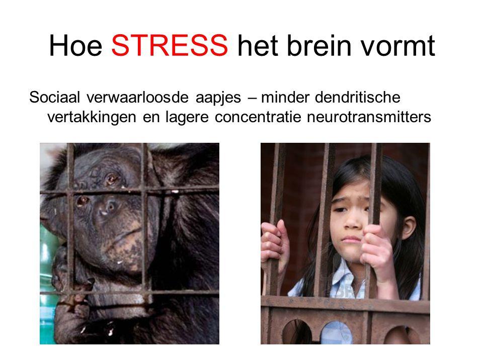 Hoe STRESS het brein vormt