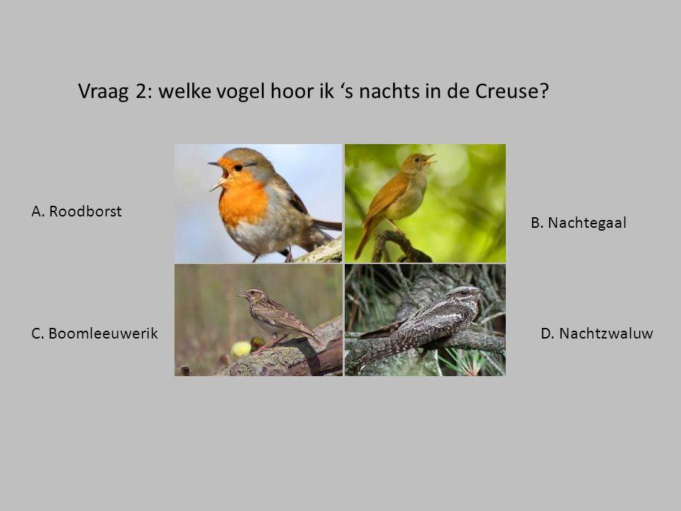 Vraag 2: welke vogel hoor ik 's nachts in de Creuse