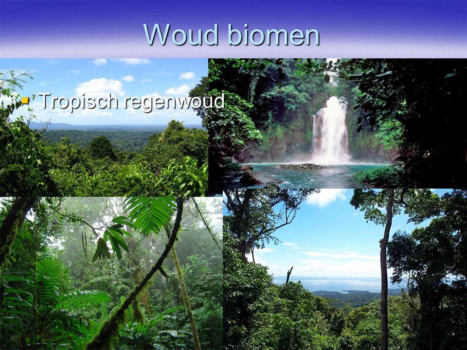 Woud biomen Tropisch regenwoud
