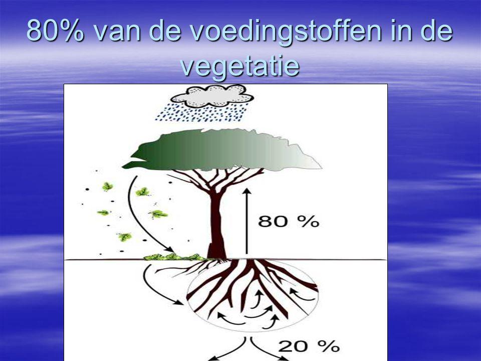 80% van de voedingstoffen in de vegetatie
