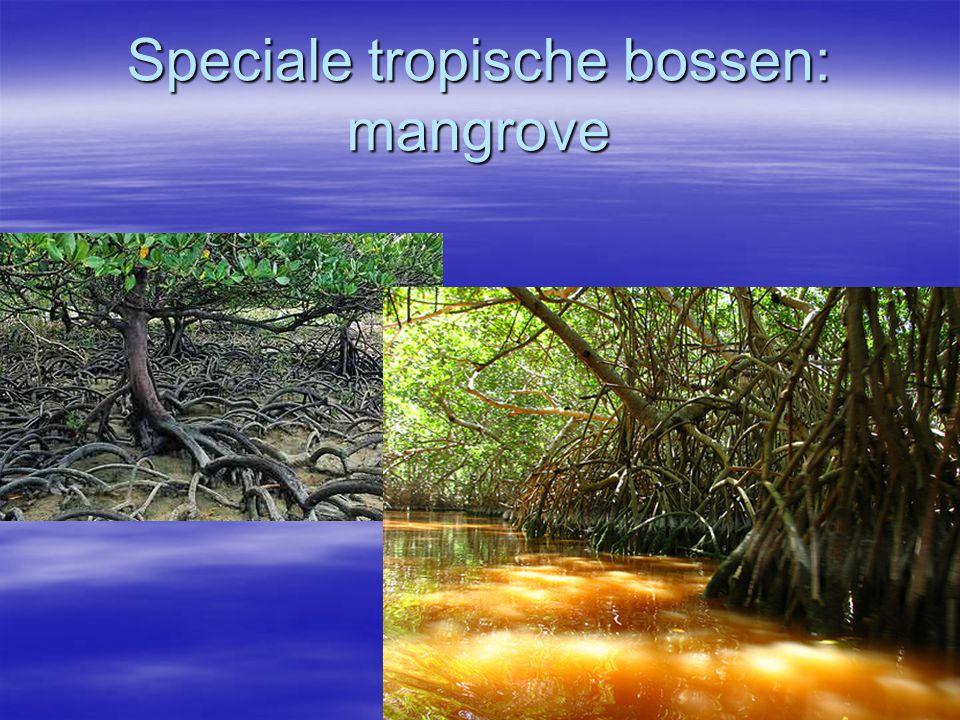 Speciale tropische bossen: mangrove