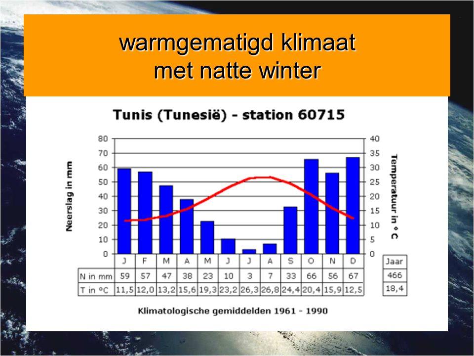 warmgematigd klimaat met natte winter