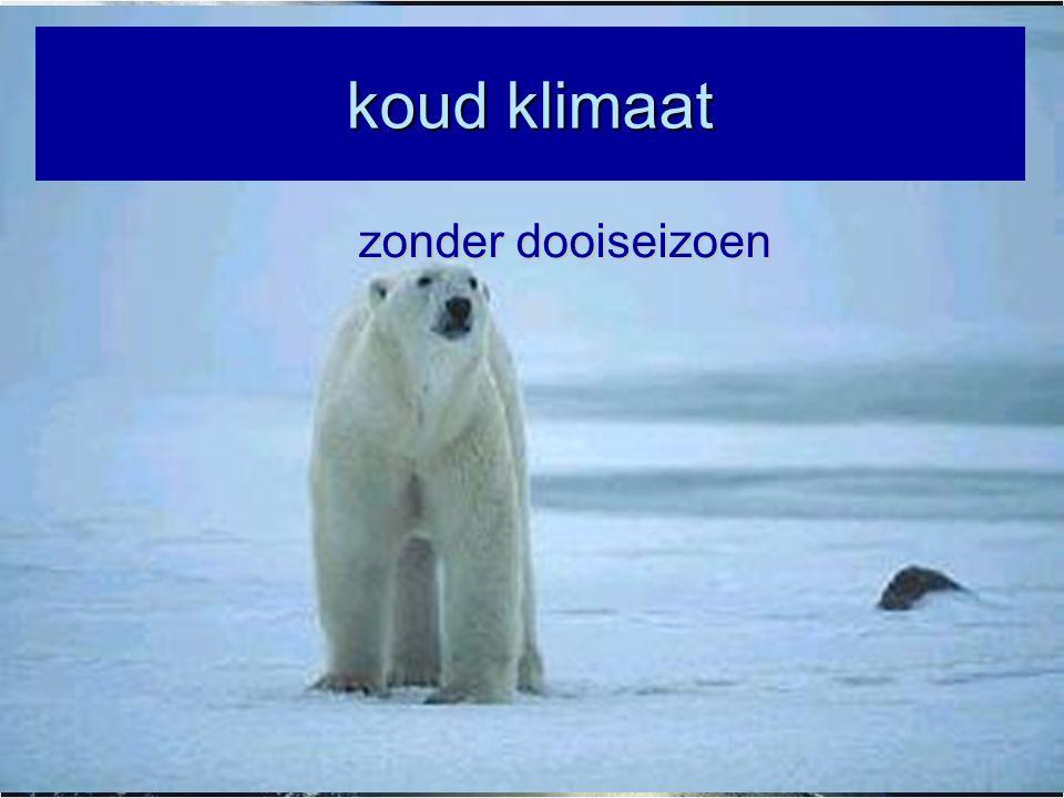 koud klimaat zonder dooiseizoen