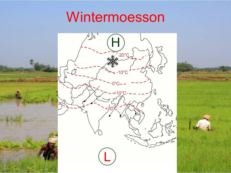 Wintermoesson H L