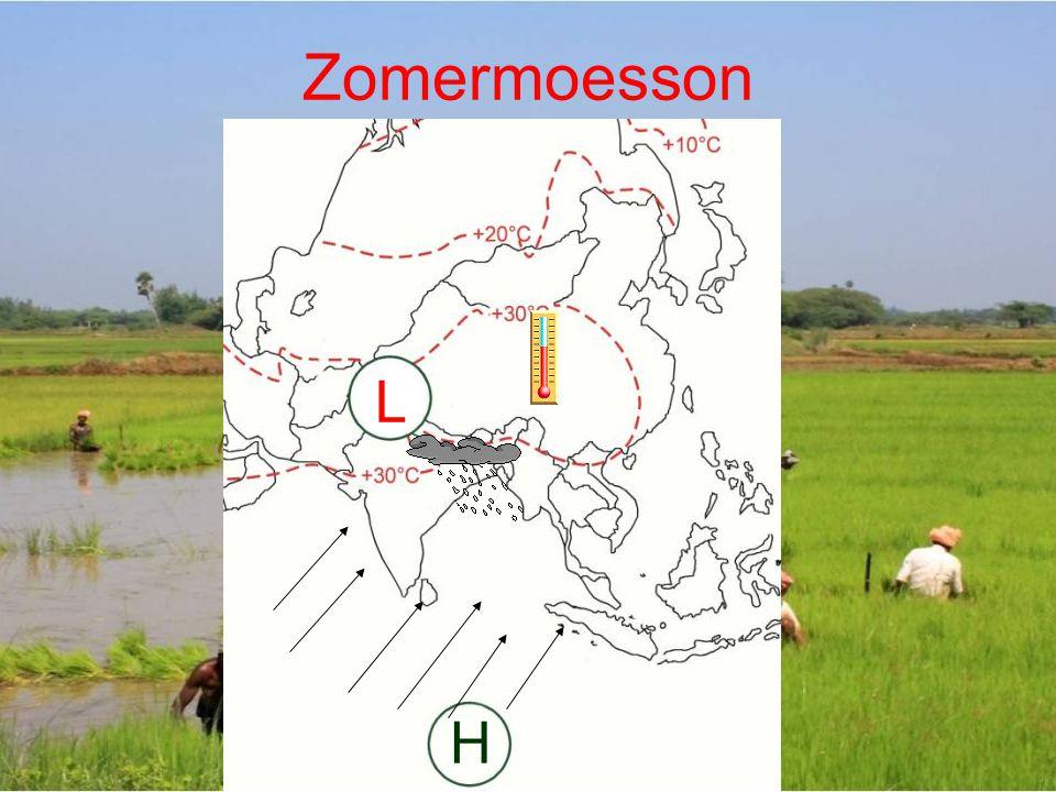 Zomermoesson L H