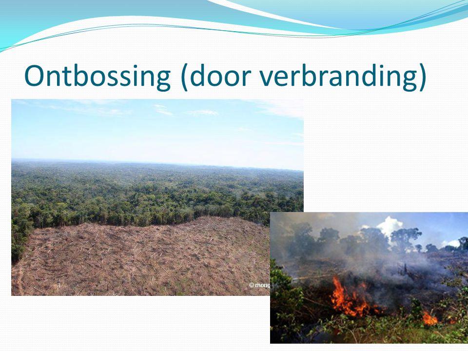 Ontbossing (door verbranding)