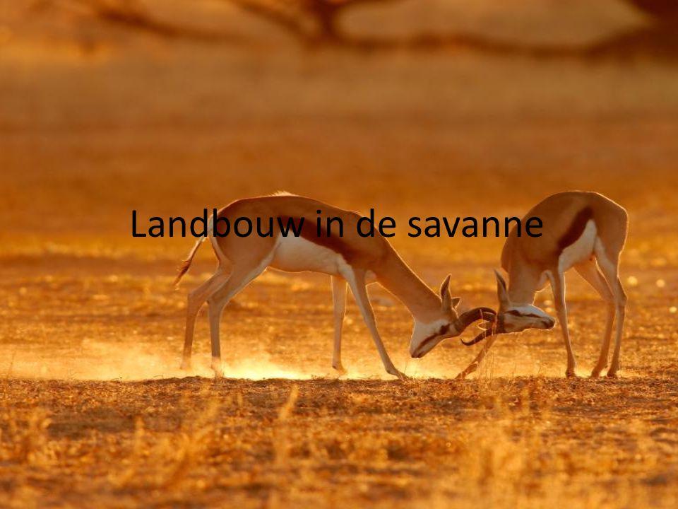 Landbouw in de savanne
