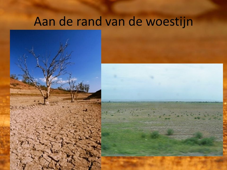 Aan de rand van de woestijn