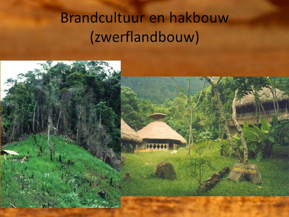 Brandcultuur en hakbouw (zwerflandbouw)