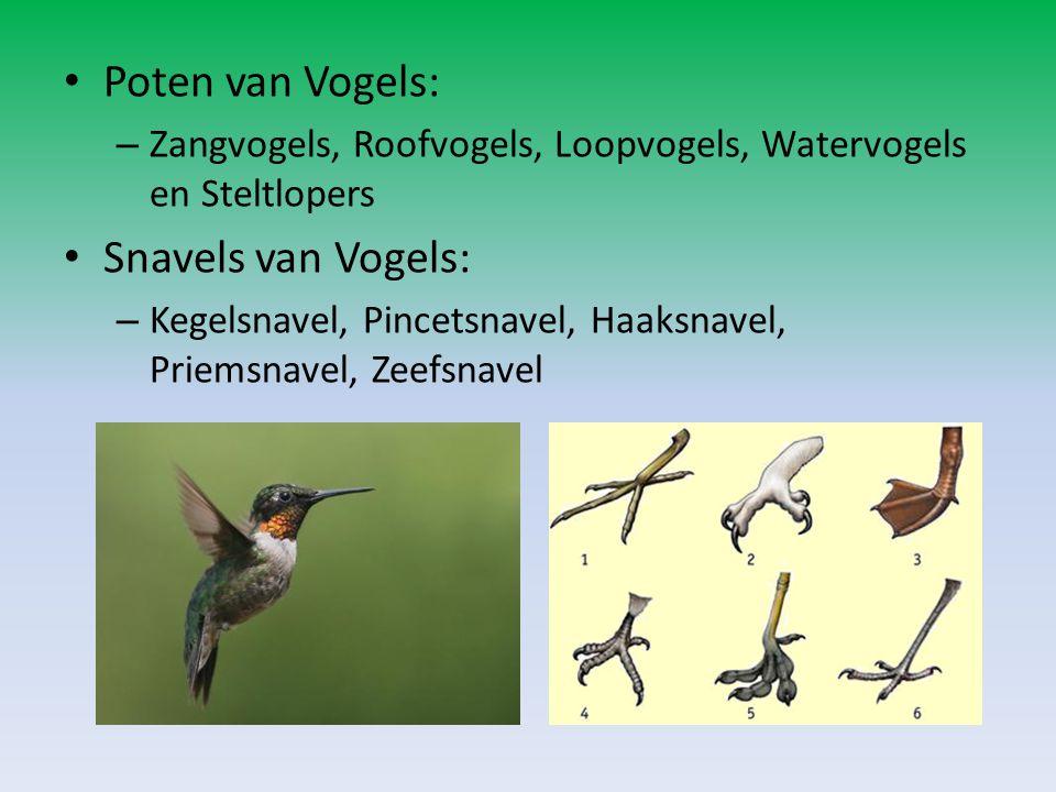 Poten van Vogels: Snavels van Vogels: