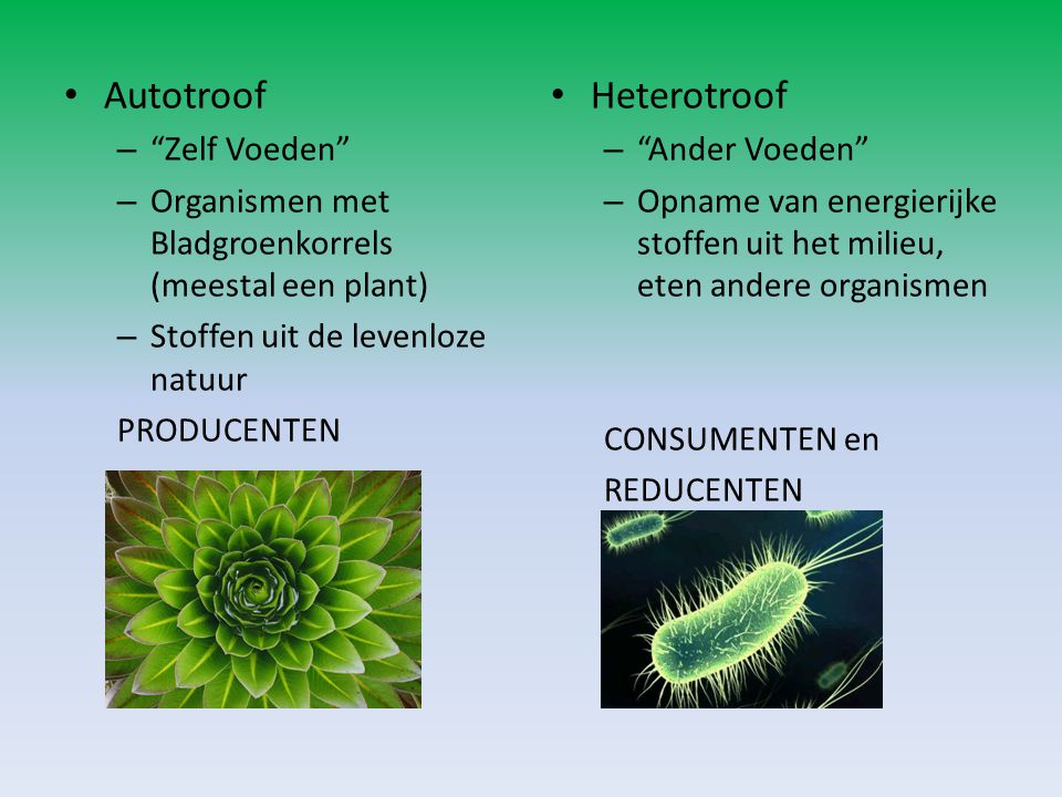 Autotroof Heterotroof Zelf Voeden