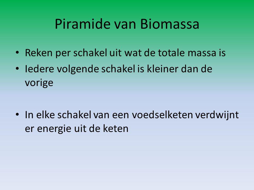 Piramide van Biomassa Reken per schakel uit wat de totale massa is