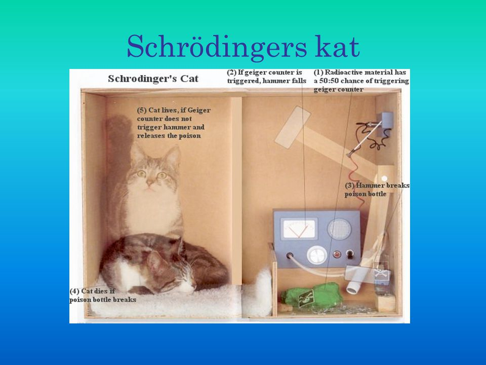 Schrödingers kat