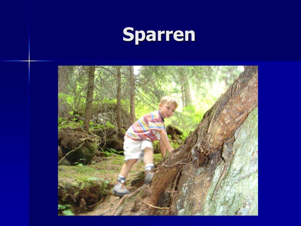 Sparren