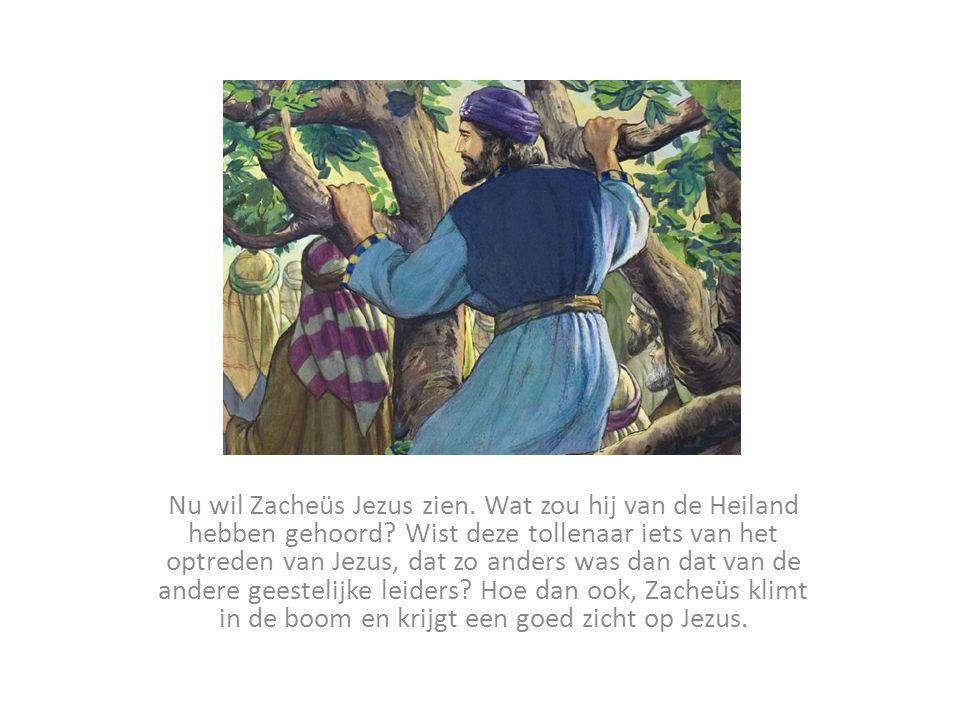 Nu wil Zacheüs Jezus zien. Wat zou hij van de Heiland hebben gehoord