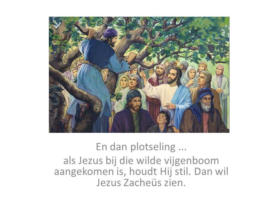 En dan plotseling ... als Jezus bij die wilde vijgenboom aangekomen is, houdt Hij stil.