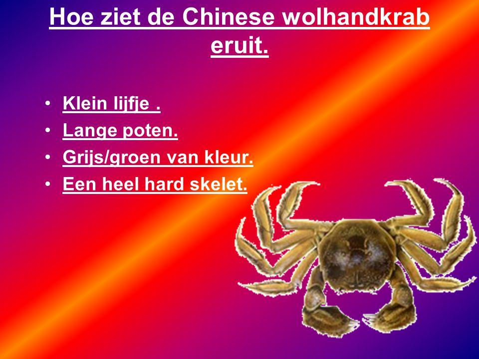 Hoe ziet de Chinese wolhandkrab eruit.