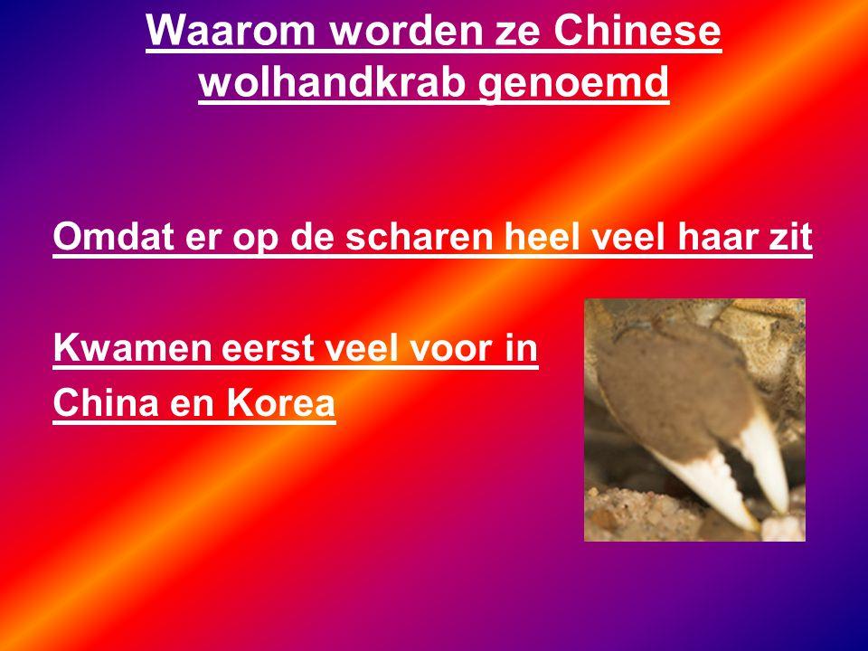 Waarom worden ze Chinese wolhandkrab genoemd